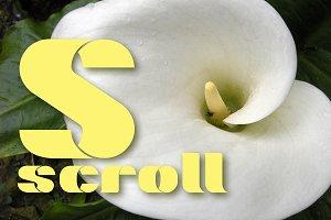 Marsh Scroll