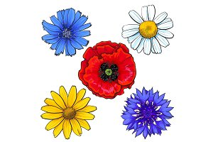 Set of wild, field flowers - poppy, chamomile, cornflower, daisy