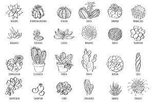 Hand drawn vector cactus set.