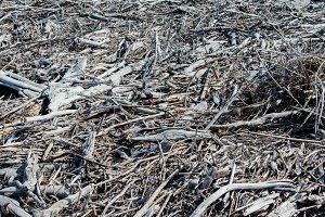 Driftwood #02