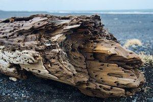 Driftwood #01