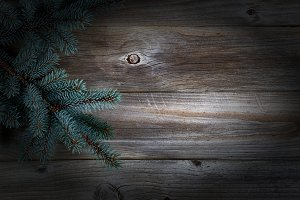 Pine Tree on aged wood with vignette