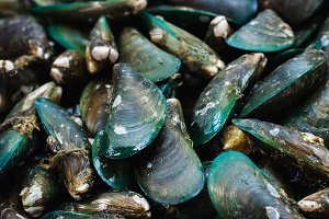 Green mussels on a fish market