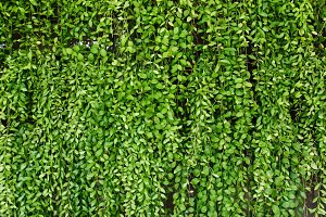 Green plant botany background