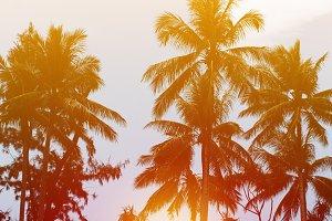 Beach sunset, sea resort