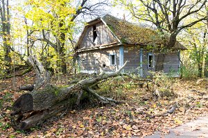 Old wooden hut. and fallen tree.