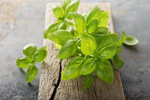 Fresh green basil from agarden