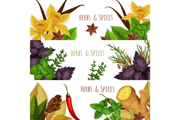 Spices And Herbs Vector Banners Set Pre Designed Illustrator Graphics Creative Market