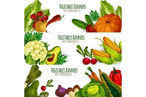 Vegetable vector banners set of fresh vegetables