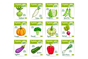 Vegetables veggies vector price cards labels set