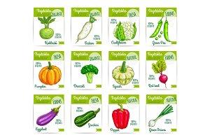 Vegetables veggies vector price cards labels set