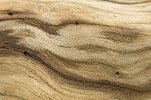 Background striped bark