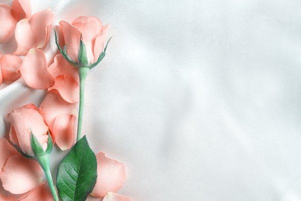 Pastel rose on silk