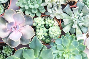 Beauty of succulents