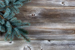 Xmas tree and old weathered wood