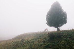Foggy morning Alpe di Siusi
