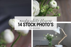 Stock photos, Moody white flower