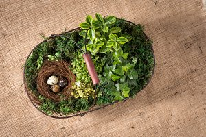 Basket with quail eggs with plants