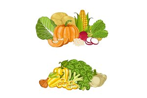 Fresh organic vegetable isolated composition set