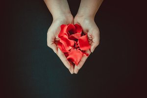Beautiful red rose petals in the hands of the girl on a black background. Postcard for Valentine's Day, March 8, mother's Day or wedding. Free space for text