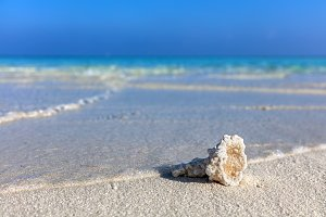 Shell, coral reef on sandy tropical beach in Maldives