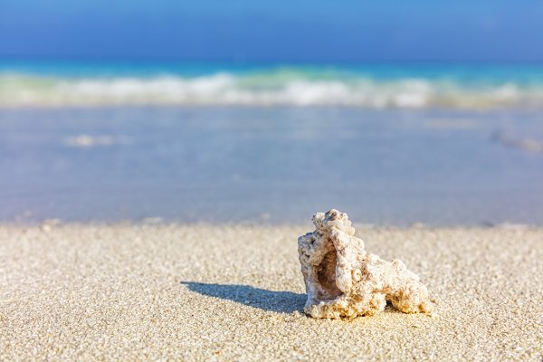 Shell, coral reef on sandy tropical…