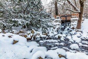 Winter park. Park Oliwski, Gdansk, Poland