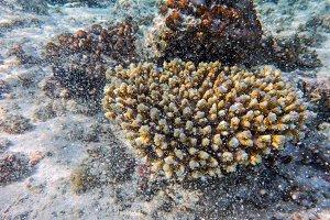 Underwater coral reef in Indian Ocean, Maldives.