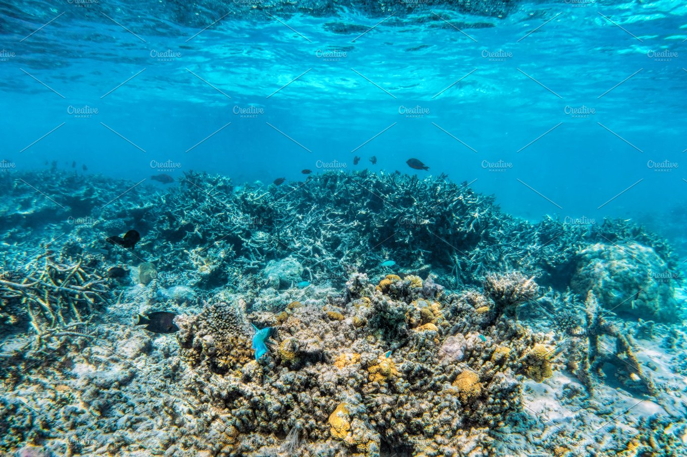 Underwater coral reef and fish in Indian Ocean Maldives