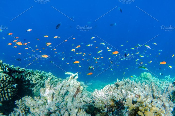 Underwater coral reef and fish in Indian Ocean, Maldives ...