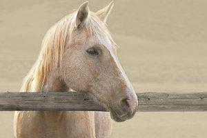 Historic Sombrero Ranch Horse