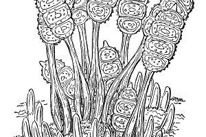 Bramble Plant Illustration