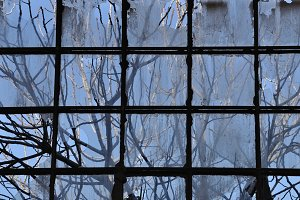 Branches Factory Window