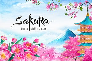 Sakura. Riot of Cherry blossom.