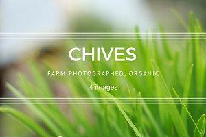 Chives set