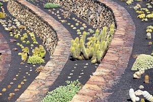 Tropical cactus garden in Guatiza