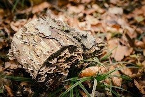 Stump and Moss