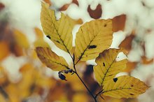 Autumns Leaves #02