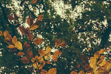 Autumns Leaves #01