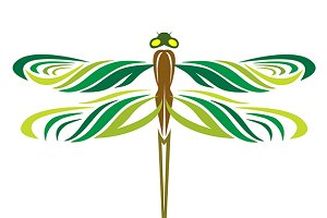Dragonflies are three wings.