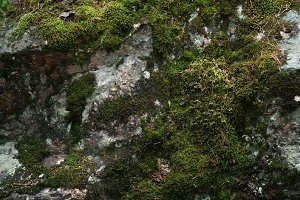 wet moss on the rock surface