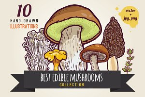Hand drawn mushrooms collection.