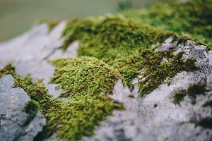 Macro of Natural Green Moss