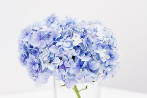 Hydrangeas in vase on desk