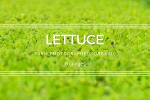 Baby Lettuce set