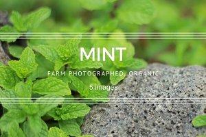 Mint plant set