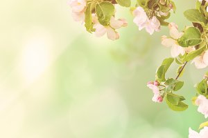 Apple floral background