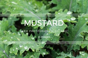 Mustard plants set