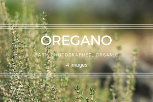 Oregano plants set