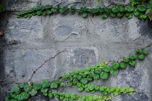 Stone and green leaves